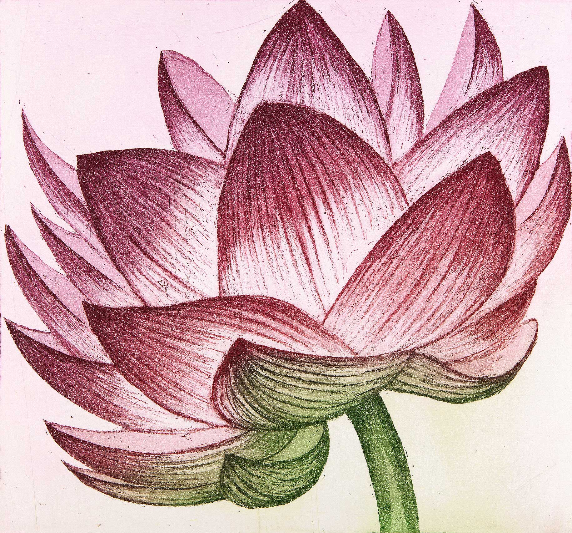 'Lotus' by Morna Rhys