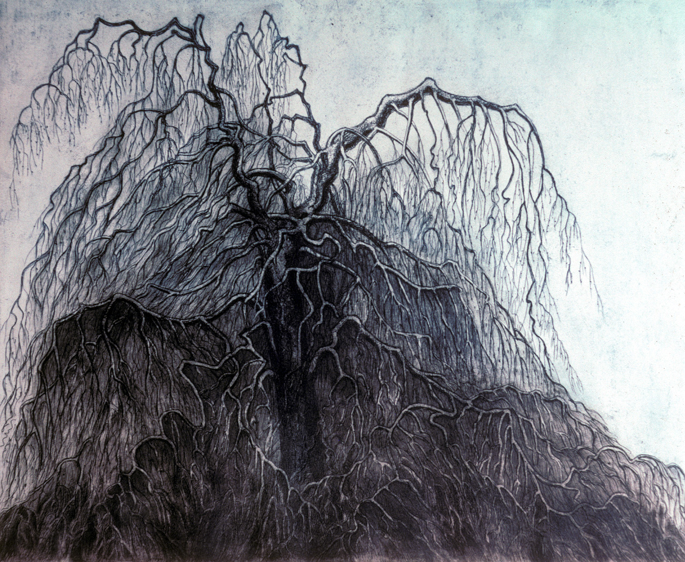 'Weeping Beech' by Morna Rhys